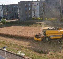 Lublin Farmár