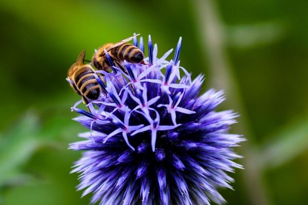 včely a vábenie